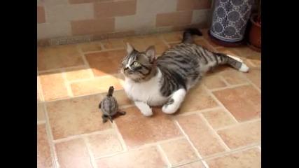 Костенурка иска да стане приятел с котка