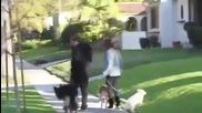 Майли Сайръс разхожда си кученце