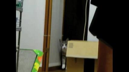 Котка - Нинджа ...