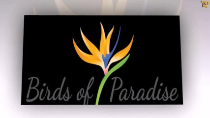 Стрелиция ... (bird Of Paradise - Flower)