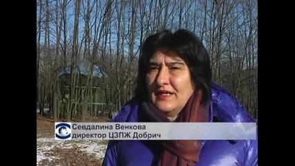 Добрич и Драгоман са били най-студените градове в България - минус 16 градуса