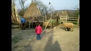 Дебели Рът - Маги и овцете - 04.2009