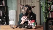 Куче яде като човек (смях)