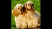 сладурски кученца