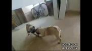 малко кученце срещо отражението му