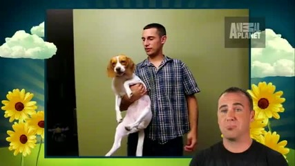 Сладко кученце Бигъл Бейли се прави на умряло