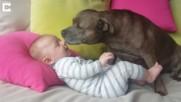 Чаровно приятелство на питбул и бебе!