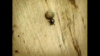 Dung From There! Minuscule
