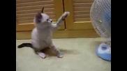 Сладко коте си играе с вентилатор (*)