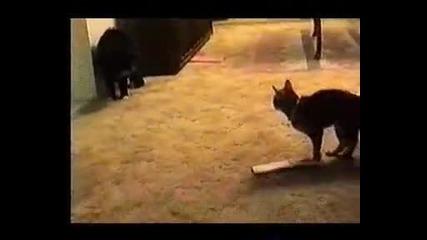 !!говорещо Коте ?!