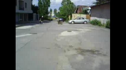 Глутница Кучета Пазят Територия