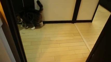 Котето Мару губи играчка