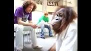 Маймуна Пич Живее В Холивуд