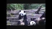 Кихащата Панда