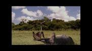 Динозаври (част 10)