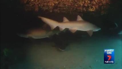 Леководолази в акция за освобождаване от смъртоносна примка акула !