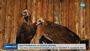 Три лешояда от Чехия и Латвия ще бъдат пуснати на свобода у нас