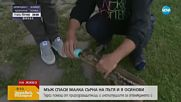 Мъж спаси две бебета сърни на пътя и ги осинови