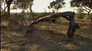 Леопард убива маймуна и открива малкото и... Вижте Продължението Не е За Вярване !!!!