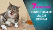 Животните, които обичат алкохола