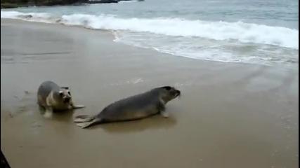 Тюлени пуснати на Свобода