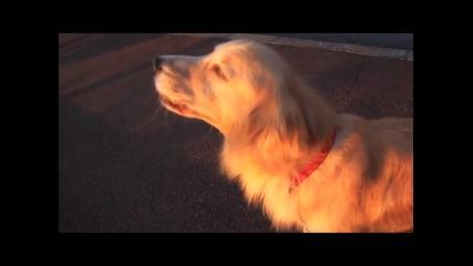Куче имитира сирената