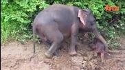 Слон спасява бебето си от удавяне в река
