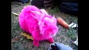 розово зайче