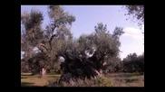 Vasilis Karras - Kano ena tsigaro