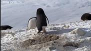 Пингвин Крадец ...