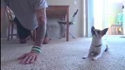 Чихуахуа и стопанина му правят йога заедно!