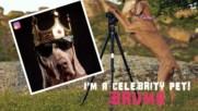 I'm a Celebrity Pet: Bruma is a bone-afide Insta model