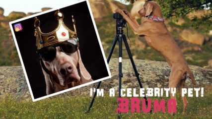 I'm a Celebrity Pet: Bruma is a bone-afide Insta model