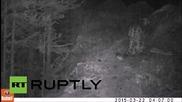 Russia: Endangered snow leopard filmed in Serbian national park