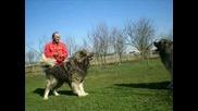 Кавказка овчарка и малко кангалче