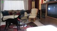 Много смешни видеа с кучета - Компилация 2013 - Hd