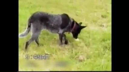 Най-интелигентното куче в света