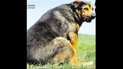 Най - огромните животни в света