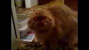 Тази котка ще ви разбие:)