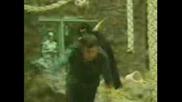 Маймуна напада човек