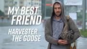 Как гъска може да ти стане най-добър приятел?