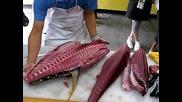 Разфасоване на голяма риба Тон