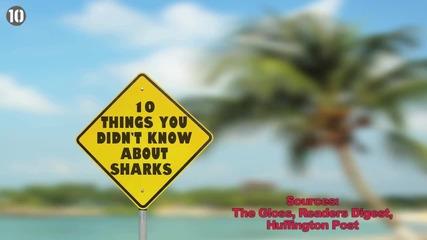 10 Неща които не знаете за Акулите