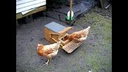 Оригинална хранилка за кокошки