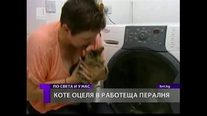 Коте оцеля в Пералня 28 Юли 2011