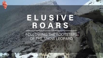 Elusive Roars