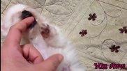 Запознайте се с най-сладкото кученце :)