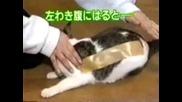 Котка С Тиксо