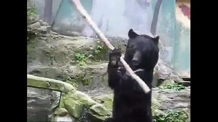 Kung Fu Bear in Japan