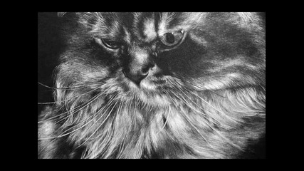 Just Wow Amazing Pencil Drawings Of Cats